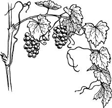 Grapevine - Current Affairs, Caloundra